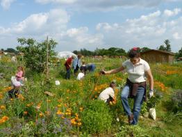Aimez la page facebook des jardiniers de Tournefeuille