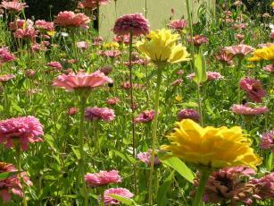 Flore de Tournefeuille