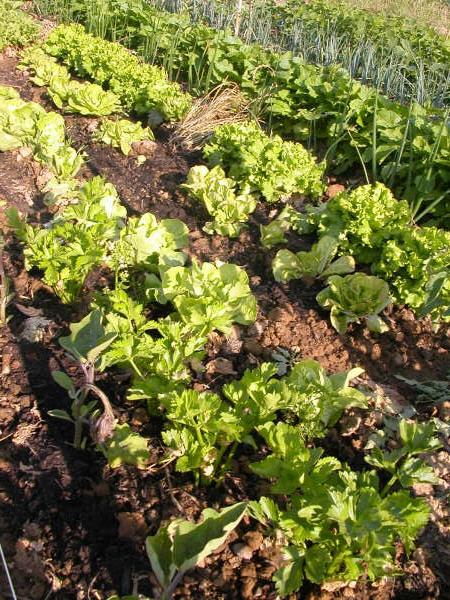 Jardins familiaux historique du projet jardiniers de for Jardins de jardiniers