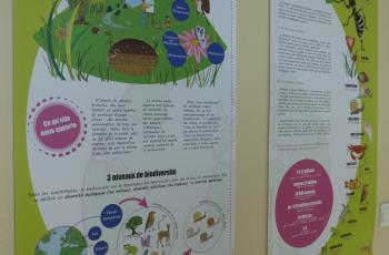 Exposition biodiversité en ville