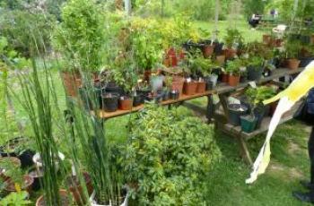 Troc'plantes 2018