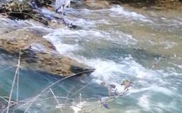 Heron observé le long du Touch a Tournefeuille, a proximité de l'aire du tir a l'arc