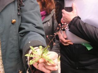 Sortie botanique à La Paderne