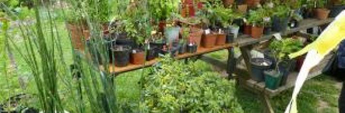 Troc'Plantes 2019